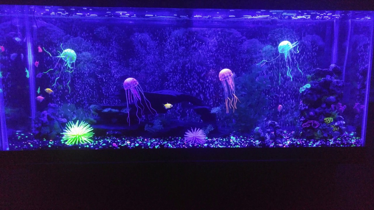 55 gallon glo fish tank setup youtube