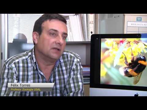 Estudio de la USAL sobre el declive de los abejorros