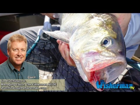 April 20, 2017 New Jersey/Delaware Bay Fishing Report with Jim Hutchinson, Jr.