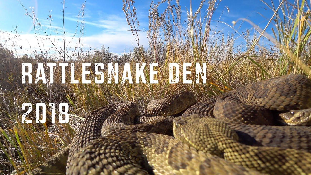 Rattlesnake Den 2018