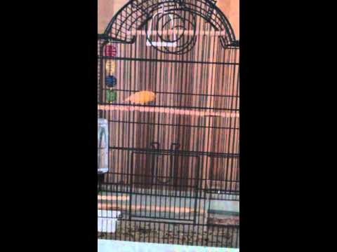 Sunny Singing an Aria