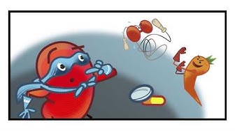 Supersankarimunuainen vs diabetes