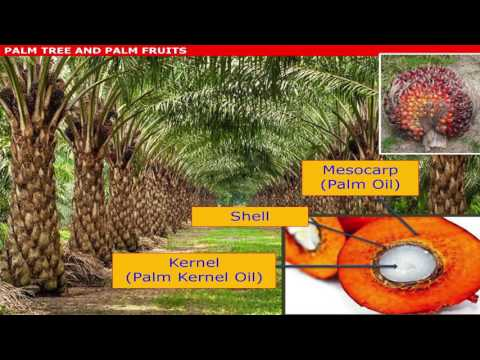 Malaysian Palm Oil International Chef Conference 2016: Oil Palm Tree & Fruits