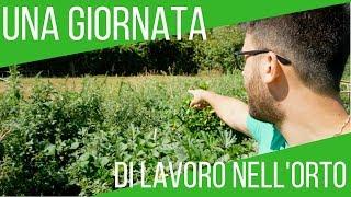 Una giornata nell'orto | La mia routine giornaliera | ORTO & GIARDINAGGIO
