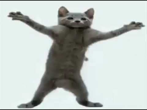 Cat Dancing To Hamster Dance 10 Hours Edition Youtube