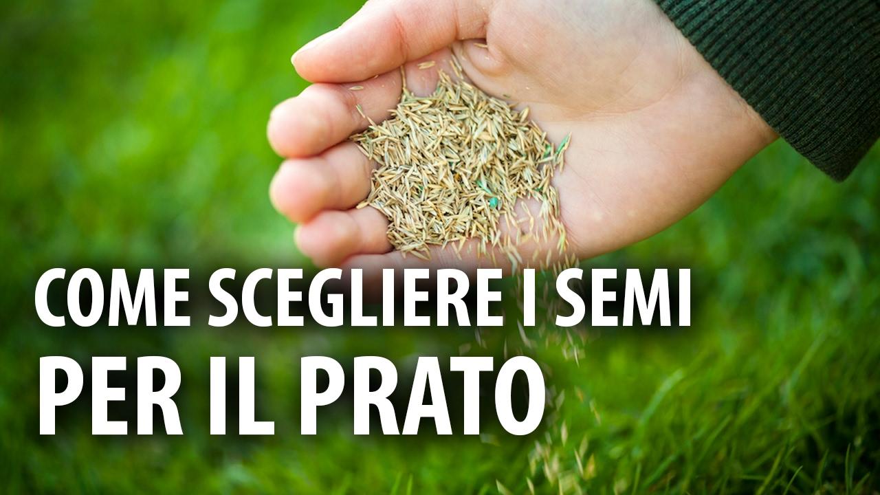 Prato Rigenerante Come Funziona come scegliere i giusti semi per il prato