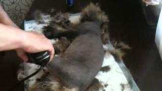Стрижка кота Васи(, 2011-05-07T10:17:35.000Z)
