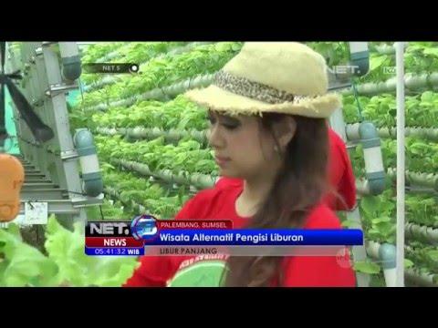 Wisata Kebun Hidroponik di Palembang - NET5