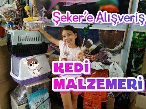 KEDİMİZ ŞEKER İÇİN ALIŞVERİŞ YAPTIK:)) kedi malzemesi fiyatları !!