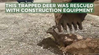Man uses construction equipment to rescue trapped deer