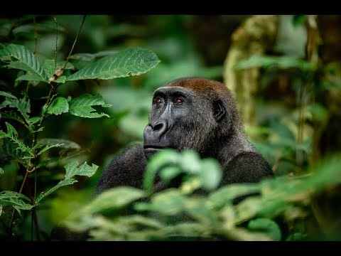 Journey into the Congo: an Exploration of Odzala