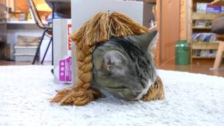 色々な髪形とねこ。NG集-Various hairstyles and Maru 2.  Blooper Reel ver.-