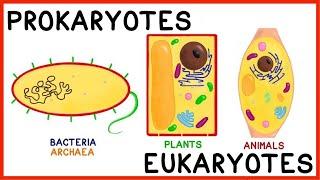 Prokaryotes vs. Eukaryotes: Compare and Contrast! (Plus Antibiotics!)