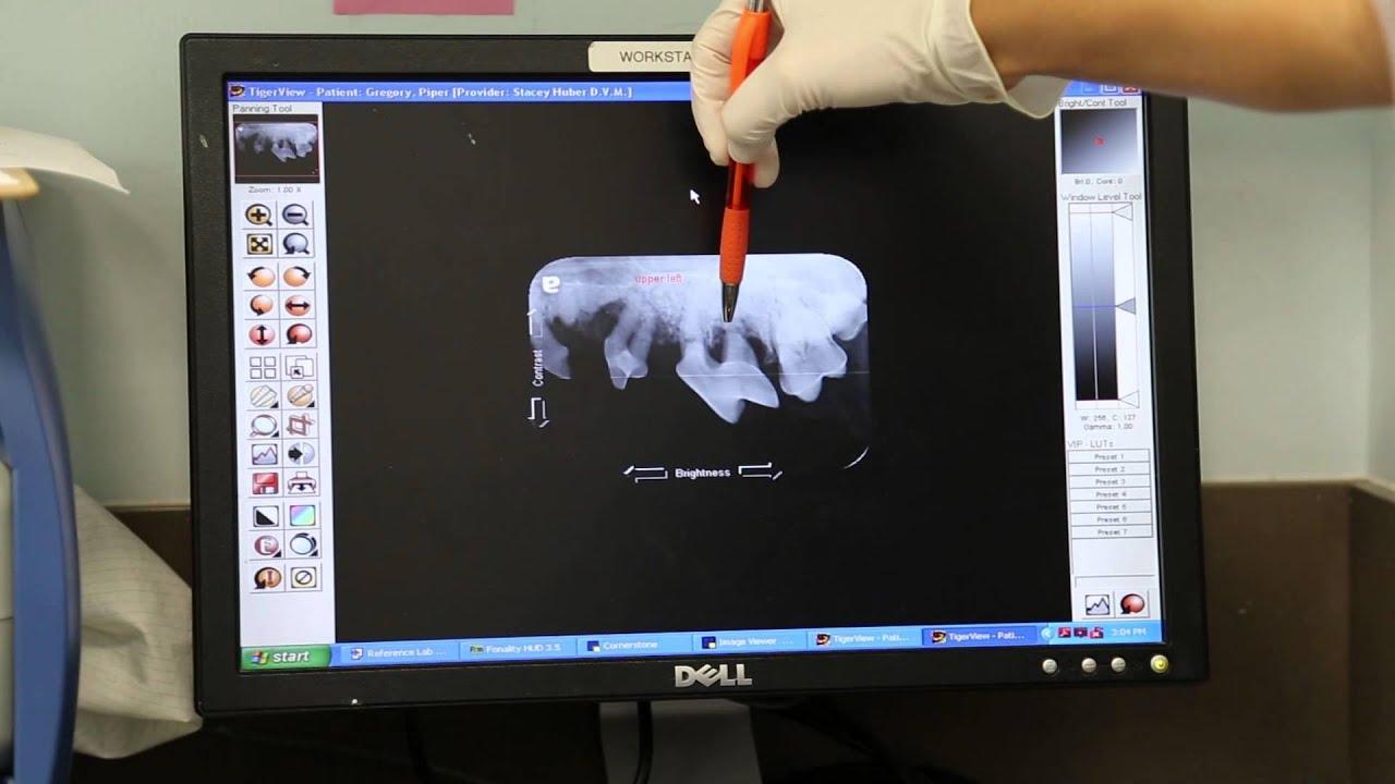 Animal Oasis Veterinary Hospital - Dental Procedure
