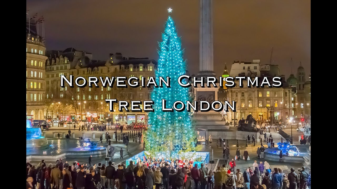 Norwegian Christmas Tree in London - YouTube