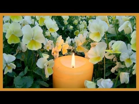 ❀ Yellow Candle in Flowers - 1 Hour (with Music)