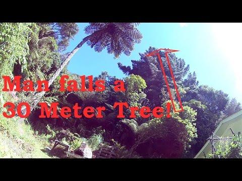 Man falls a 30 meter tree