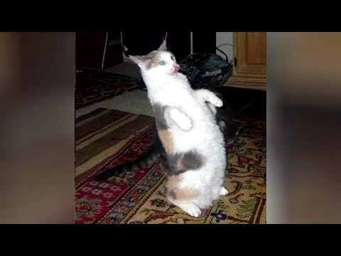 BEST of HILARIOUS ANIMALS - Watch and DIE FROM LAUGHING TOO HARD!