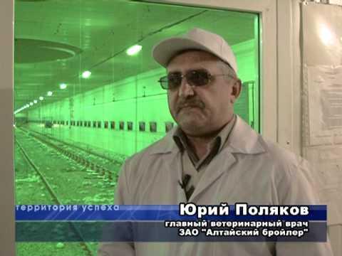 Алтайский бройлер Территория успеха