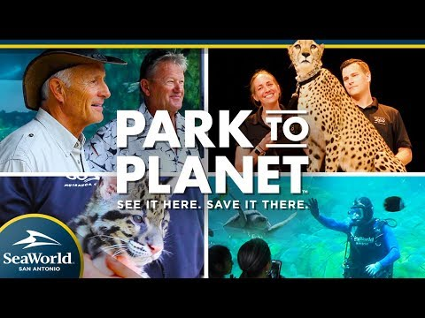 SeaWorld San Antonio - Video