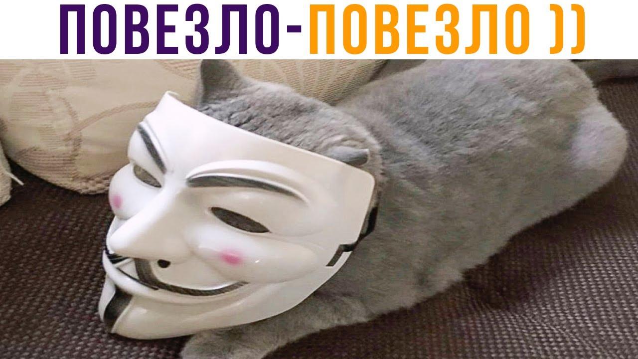ДОМЯВКАЛСЯ И ДАЛИ ЕДЫ))) Приколы с котами | Мемозг 749