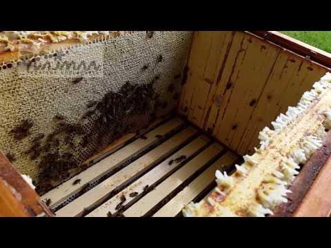 """Včely - Lesní stanoviště 2017.  Ukázka """"echt medu"""""""