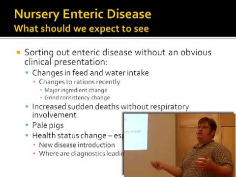 Dr. Keith Kinsley - A Review of Nursery Scouring