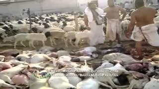 AMAZING Hajj Qurbani bakra must watch By S.S COM