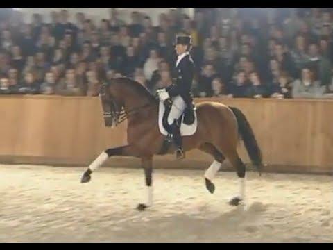 Edward Gal & United - stallion show van Uytert