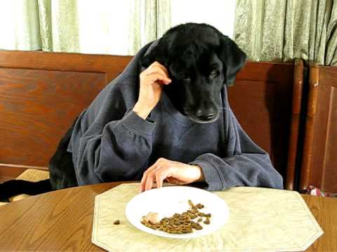 Black Labrador Retriever At Kitchen Table Silly Dog YouTube
