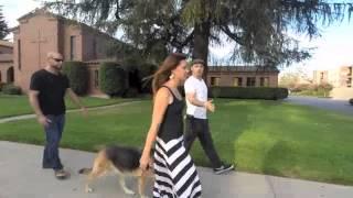 The Good Dog Minute 8/6/14: Foosa, Leash Reactive & Dog Aggressive Gsd