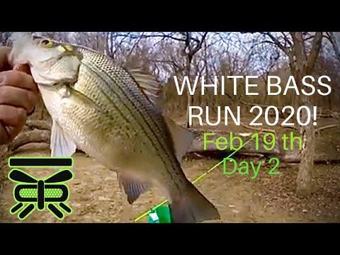 WHITE BASS RUN 2020! Feb 19th