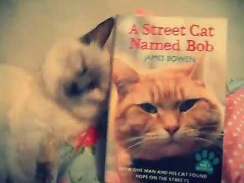 My cat loves james bowens book a street cat named bob