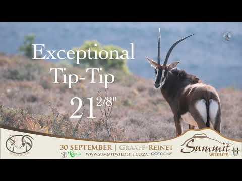 Green 47- Summit Wildlife Auction