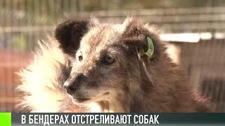 В Бендерах отстреливают бездомных собак