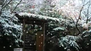 2012年11月21日 発売 作詞 幸田りえ 作曲 幸斉たけし 編曲 石倉重信 新...
