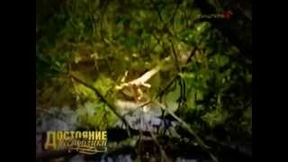 видео Петровское-Алабино (Петровское-Княжищево)