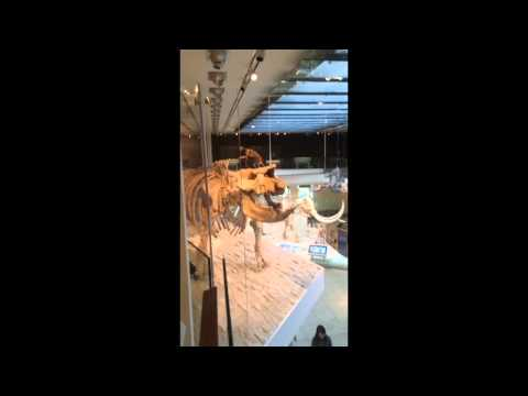 En una de las Salas de Dinosaurios en el Museo de historia natural de los Ángeles