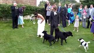 Dog Gives a Bride a Special Wedding Present   LOL! Funny
