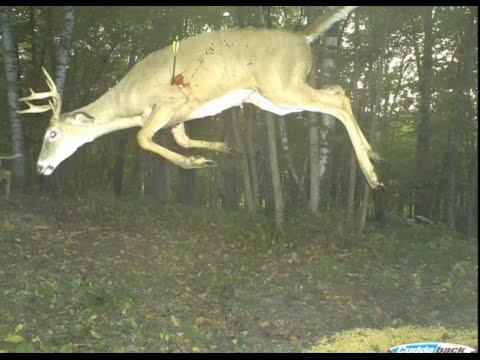 Craziest Trail Cam Pictures Ever Captured