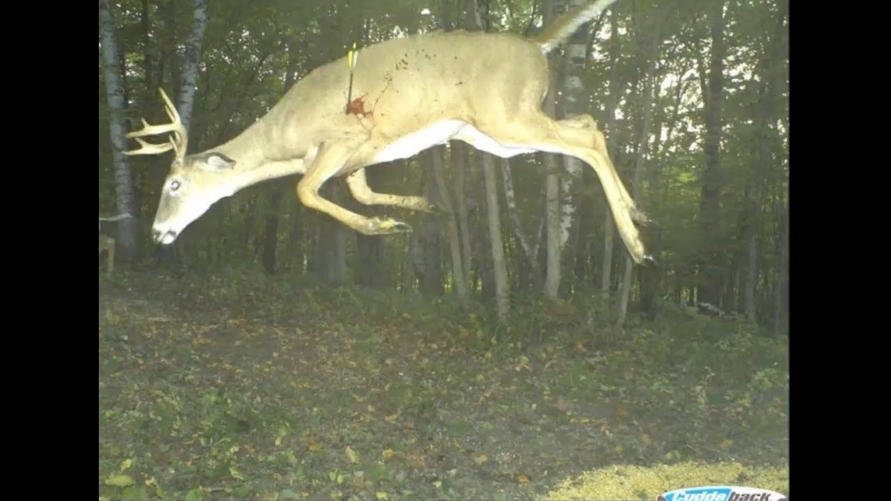 Weird Deer Pictures 2