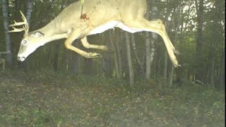 Craziest Trail Cam Pictures Ever Captured