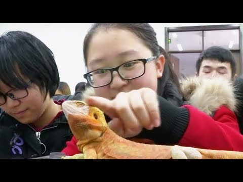 Chinese Hogwarts! NE China university has course for playing with pets