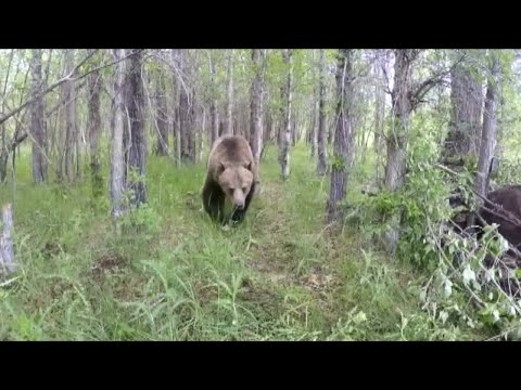 First grizzly bear sightings in Yellowstone