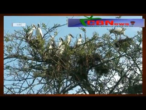naogaon bird bangladesh news - Channel Bangla News 24 TV - on you tube