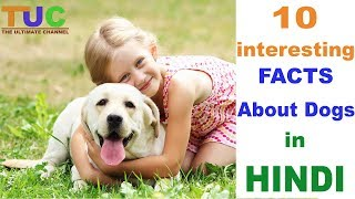 10 Intresting DOG FACTS In Hindi | Dog Facts | Popular Dogs | The Ultimate Channel
