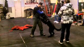 Rucker Targeting Black Jack K9 Protection Training In Chicago Illinois