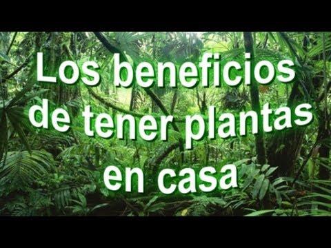 Los beneficios de tener plantas en casa seoarticulo youtube for Plantas de casa adentro