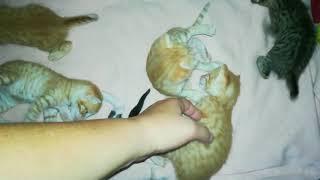 Малышам-котятам 18 дней, они очень активные