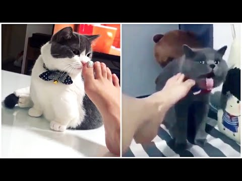 Funny Cats Reaction to Smelling Owner's Foot | Compilation 2019